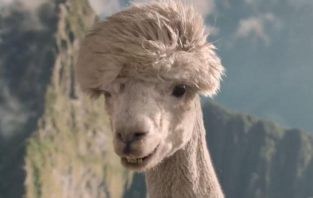 enigmistica-alpaca.jpg