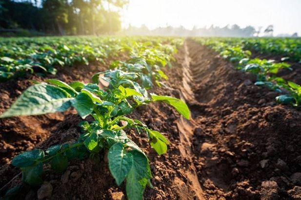 agricoltura-istat.jpg