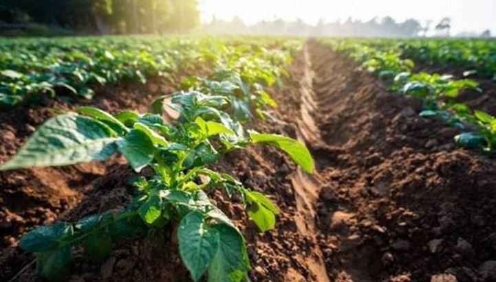 Istat, in corso la gara per la comunicazione del Censimento Generale dell'Agricoltura