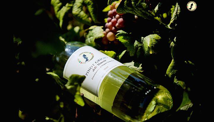 Pinot-Grigio-DOC-delle-Venezie-Grey.jpg