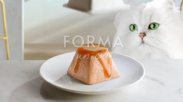 purina-gatto.jpg